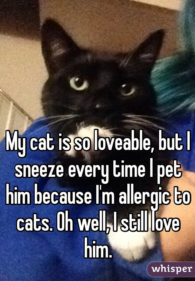 My cat is so loveable, but I sneeze every time I pet him because I'm allergic to cats. Oh well, I still love him.