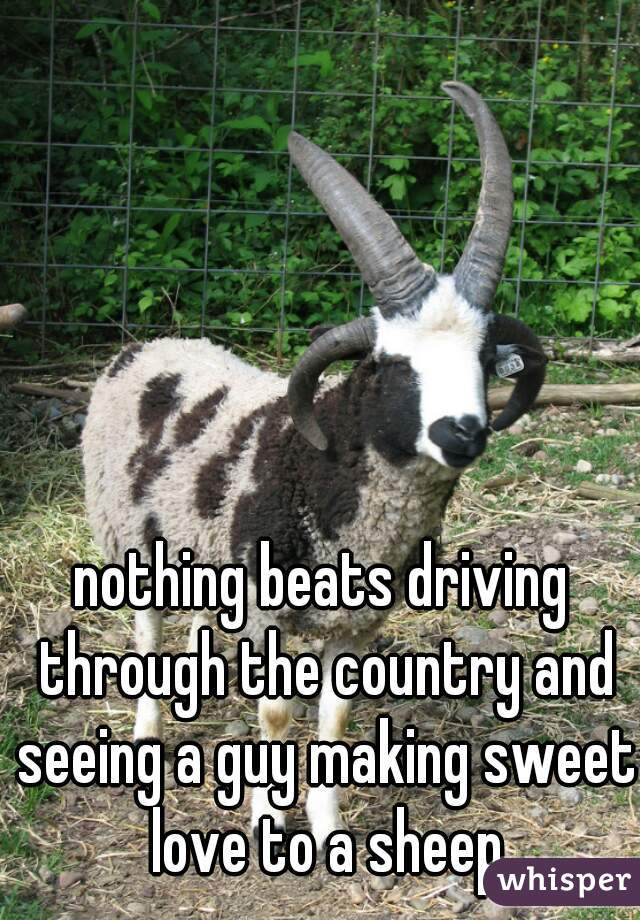 nothing beats driving through the country and seeing a guy making sweet love to a sheep