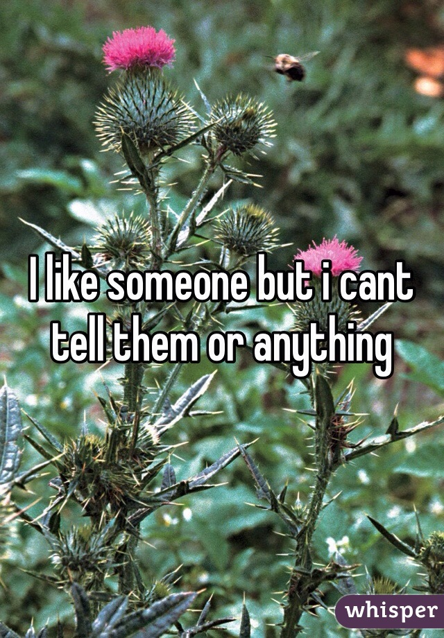 I like someone but i cant tell them or anything