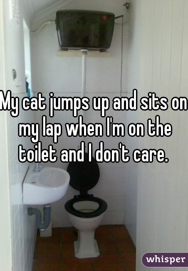 My cat jumps up and sits on my lap when I'm on the toilet and I don't care.