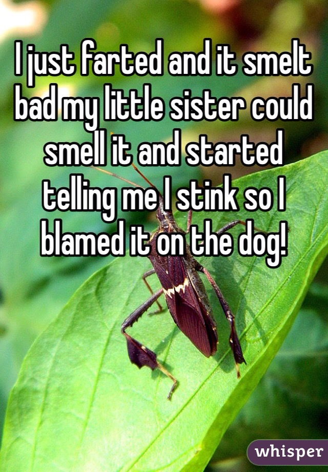 I just farted and it smelt bad my little sister could smell it and started telling me I stink so I blamed it on the dog!