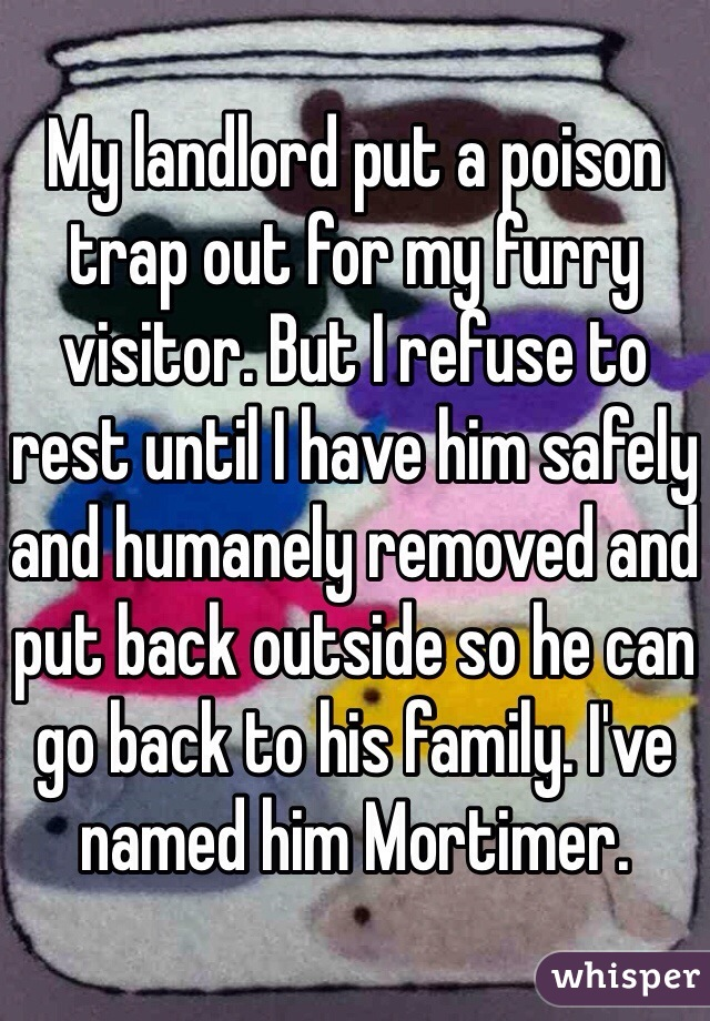 My landlord put a poison trap out for my furry visitor. But I refuse to rest until I have him safely and humanely removed and put back outside so he can go back to his family. I've named him Mortimer.