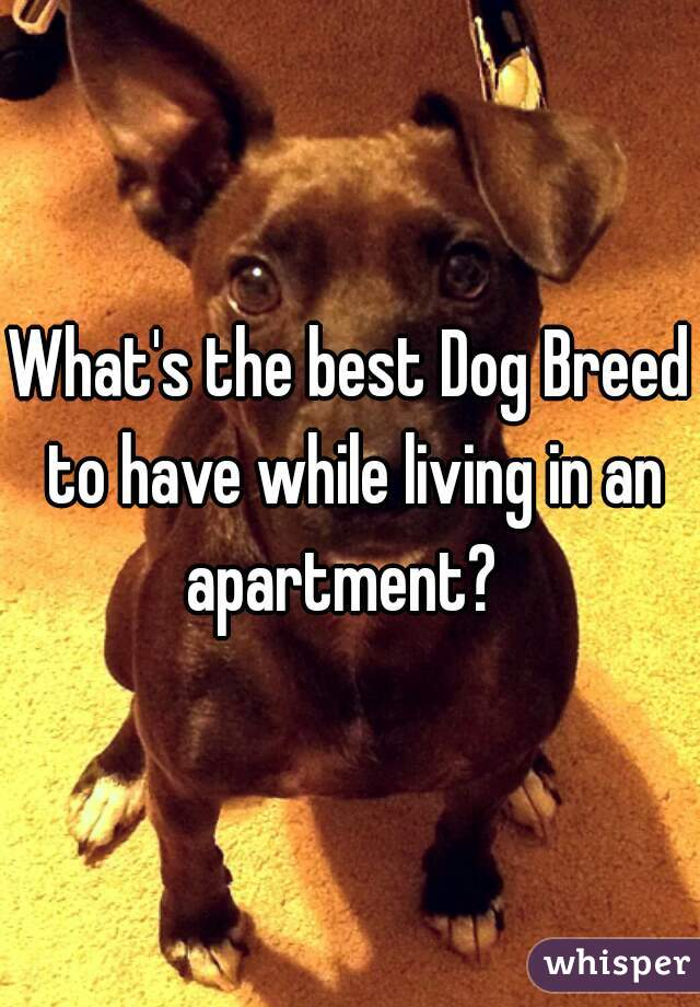 What's the best Dog Breed to have while living in an apartment?