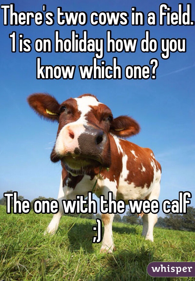 There's two cows in a field.  1 is on holiday how do you know which one?      The one with the wee calf  ;)