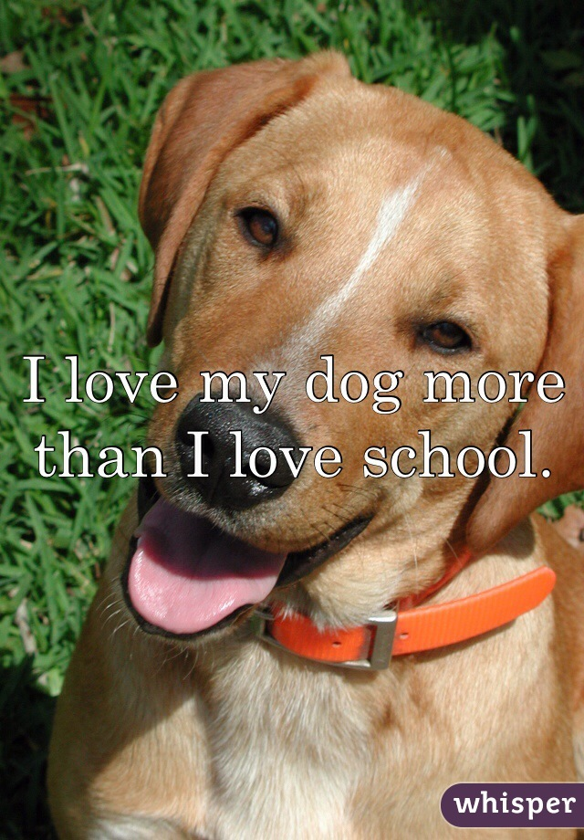 I love my dog more than I love school.