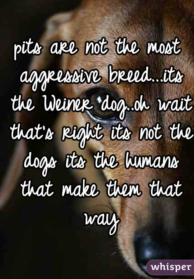 pits are not the most aggressive breed...its the Weiner dog..oh wait that's right its not the dogs its the humans that make them that way
