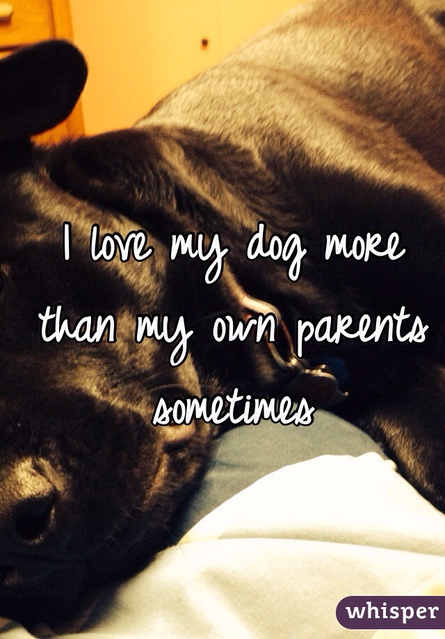 I love my dog more than my own parents sometimes