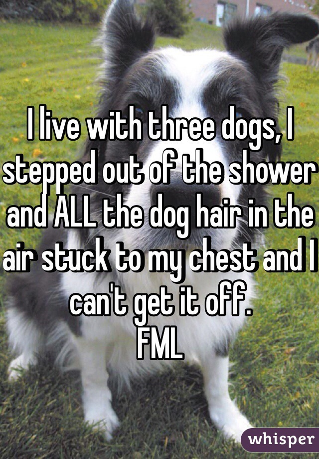 I live with three dogs, I stepped out of the shower and ALL the dog hair in the air stuck to my chest and I can't get it off.  FML