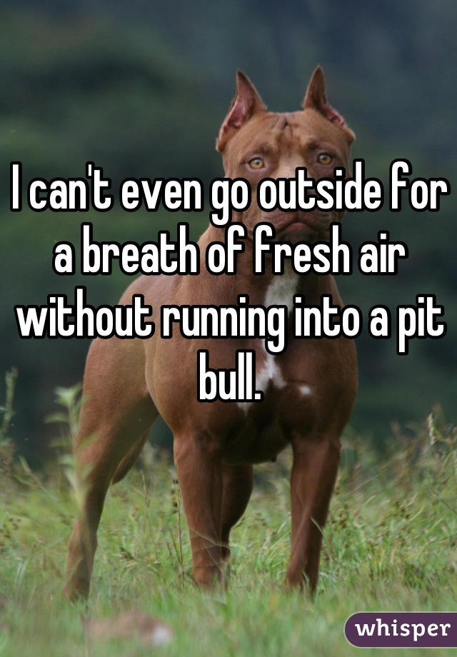 I can't even go outside for a breath of fresh air without running into a pit bull.