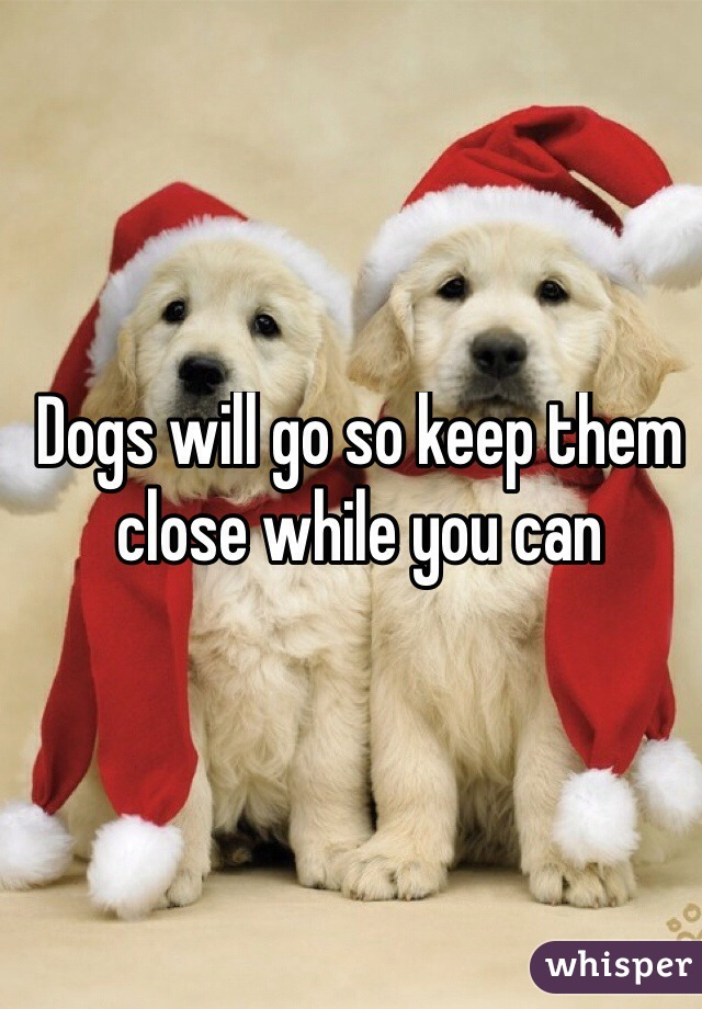 Dogs will go so keep them close while you can