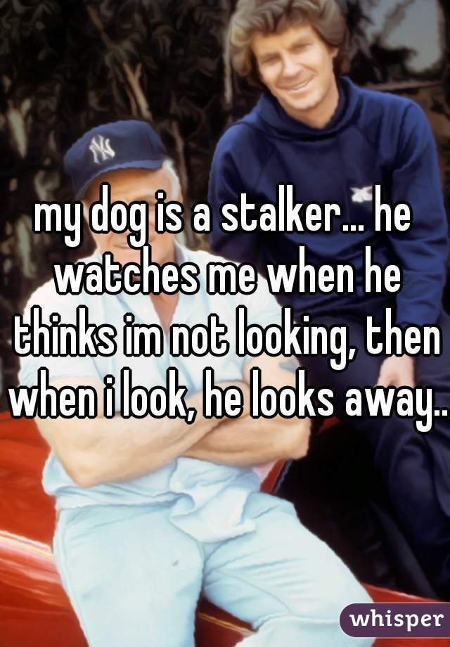 my dog is a stalker... he watches me when he thinks im not looking, then when i look, he looks away...
