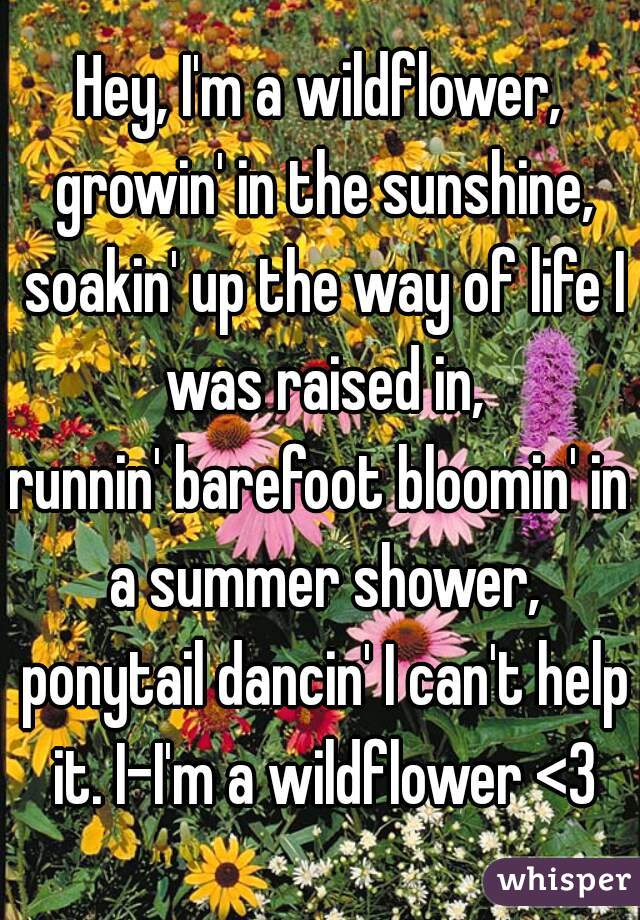 Hey, I'm a wildflower, growin' in the sunshine, soakin' up the way of life I was raised in, runnin' barefoot bloomin' in a summer shower, ponytail dancin' I can't help it. I-I'm a wildflower <3
