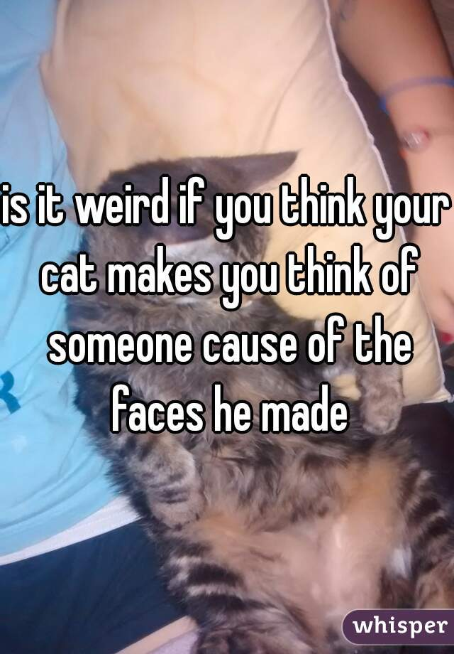 is it weird if you think your cat makes you think of someone cause of the faces he made