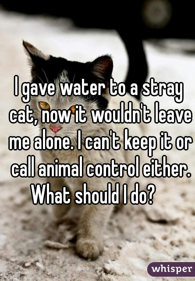 I gave water to a stray cat, now it wouldn't leave me alone. I can't keep it or call animal control either. What should I do?