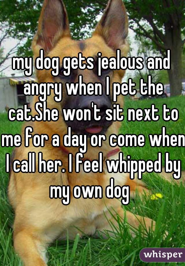my dog gets jealous and angry when I pet the cat.She won't sit next to me for a day or come when I call her. I feel whipped by my own dog