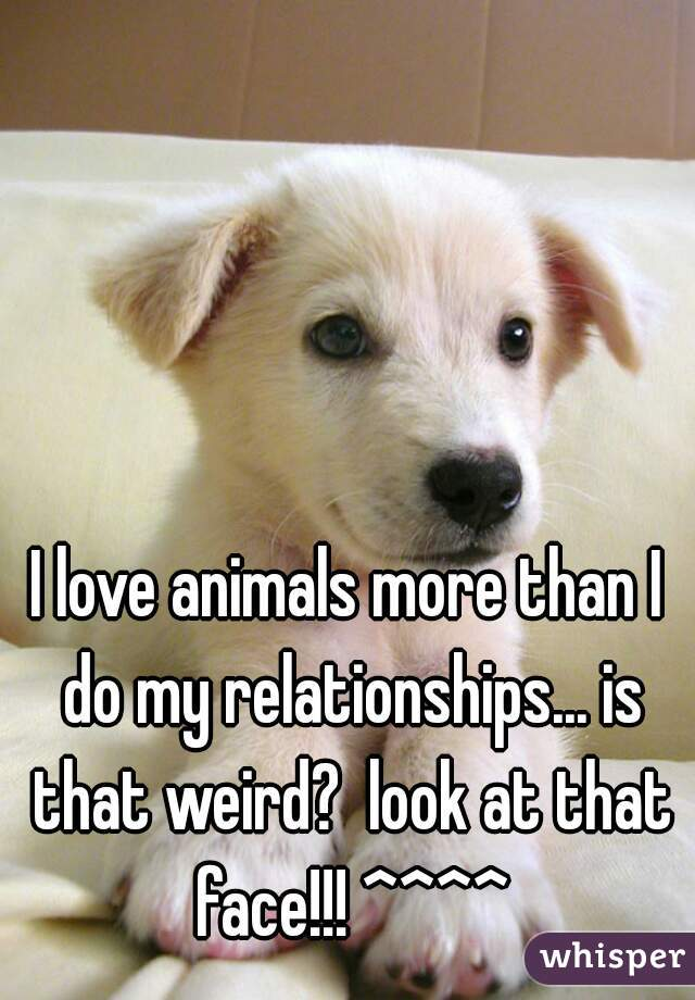 I love animals more than I do my relationships... is that weird?  look at that face!!! ^^^^