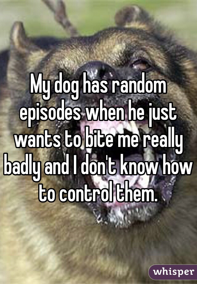 My dog has random episodes when he just wants to bite me really badly and I don't know how to control them.
