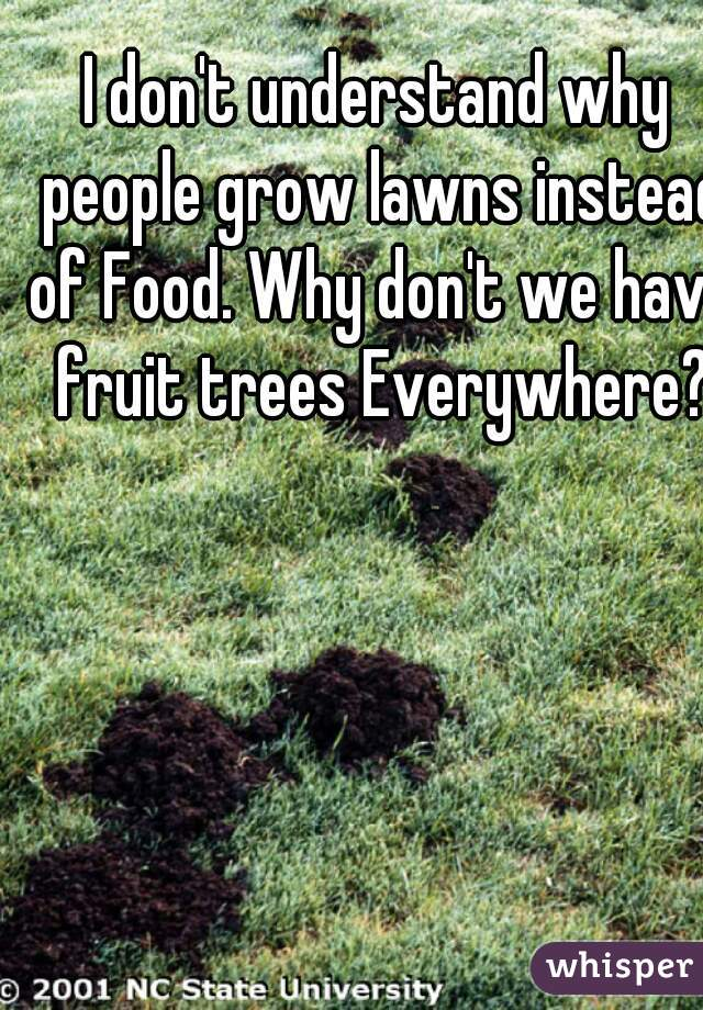 I don't understand why people grow lawns instead of Food. Why don't we have fruit trees Everywhere?