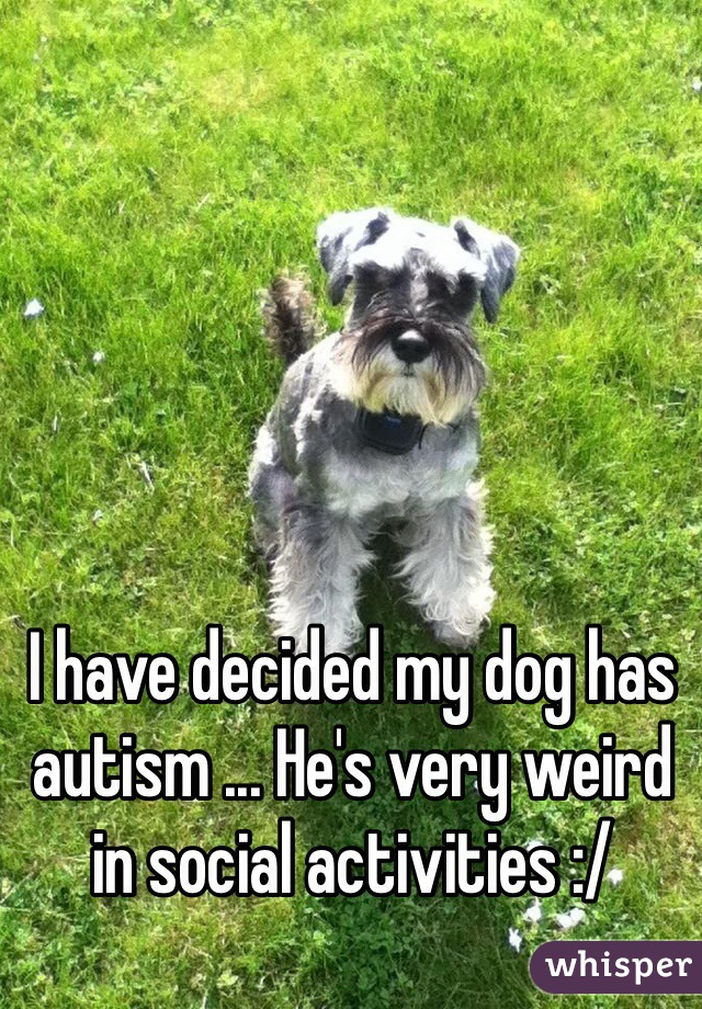 I have decided my dog has autism ... He's very weird in social activities :/