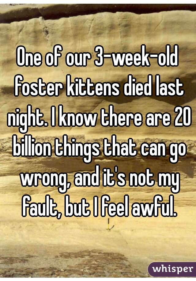 One of our 3-week-old foster kittens died last night. I know there are 20 billion things that can go wrong, and it's not my fault, but I feel awful.