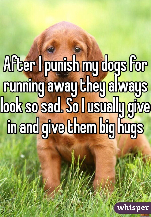 After I punish my dogs for running away they always look so sad. So I usually give in and give them big hugs