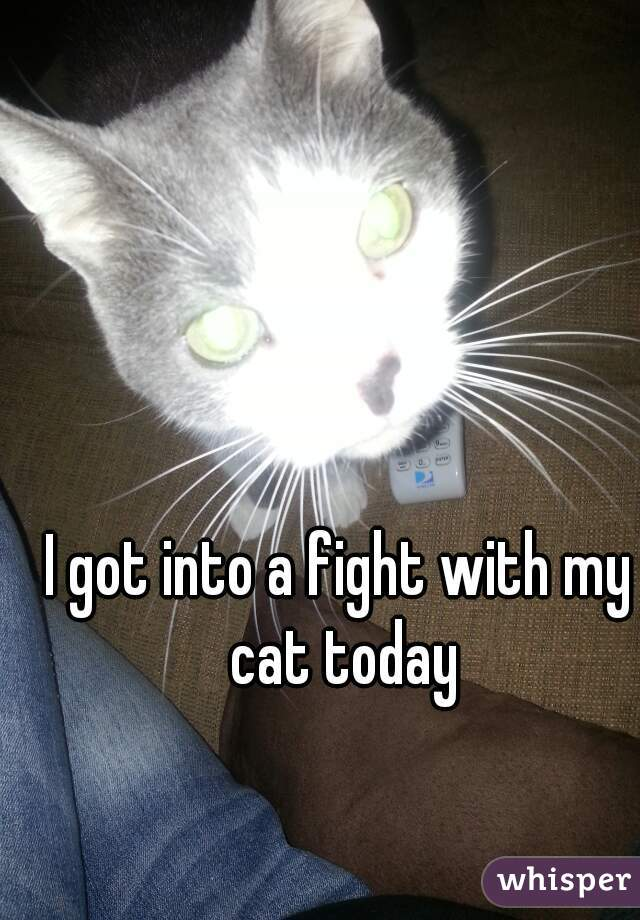 I got into a fight with my cat today