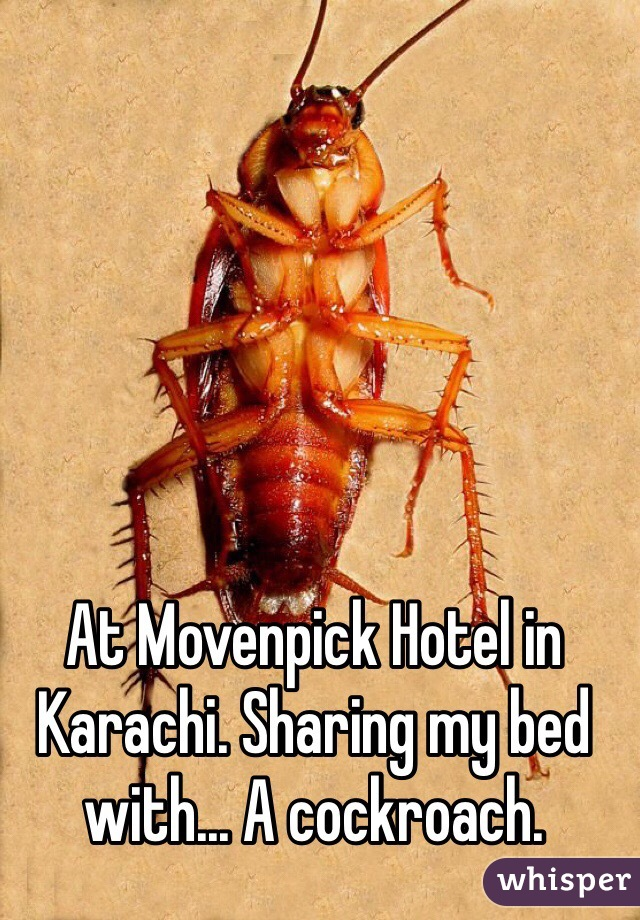 At Movenpick Hotel in Karachi. Sharing my bed with... A cockroach.