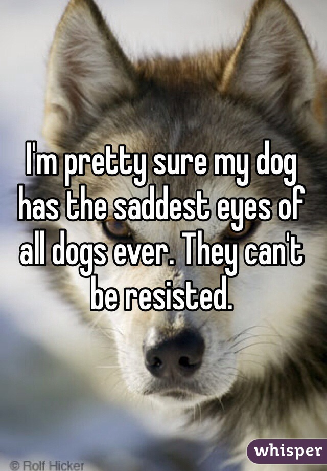 I'm pretty sure my dog has the saddest eyes of all dogs ever. They can't be resisted.