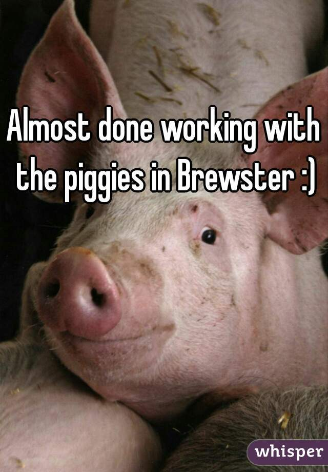 Almost done working with the piggies in Brewster :)