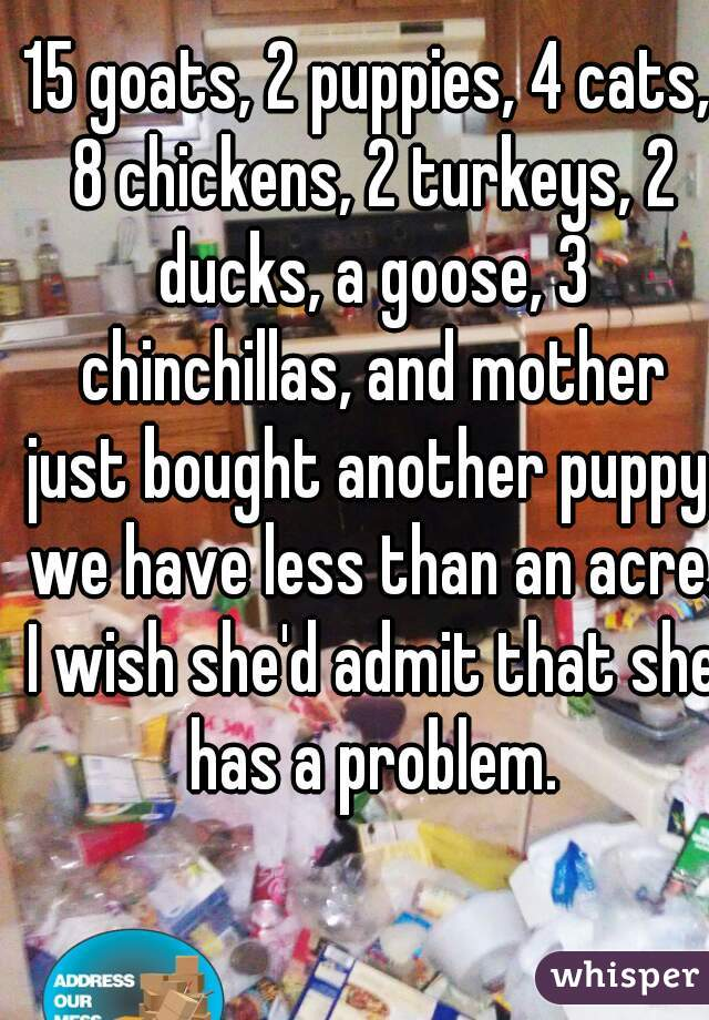 15 goats, 2 puppies, 4 cats, 8 chickens, 2 turkeys, 2 ducks, a goose, 3 chinchillas, and mother just bought another puppy. we have less than an acre.   I wish she'd admit that she has a problem.