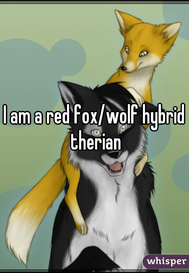 I am a red fox/wolf hybrid therian