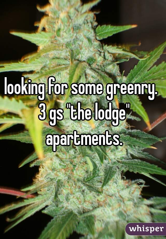 "looking for some greenry.  3 gs ""the lodge"" apartments."