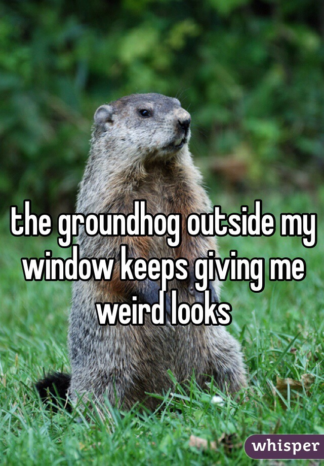 the groundhog outside my window keeps giving me weird looks