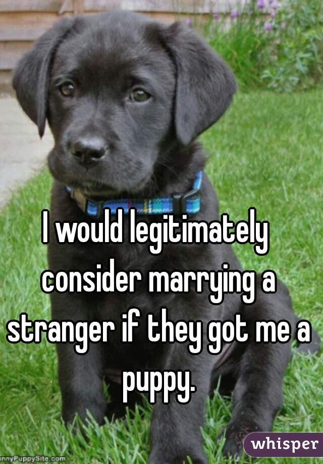 I would legitimately consider marrying a stranger if they got me a puppy.