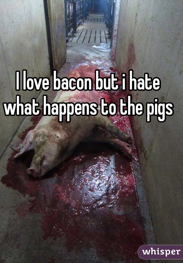 I love bacon but i hate what happens to the pigs