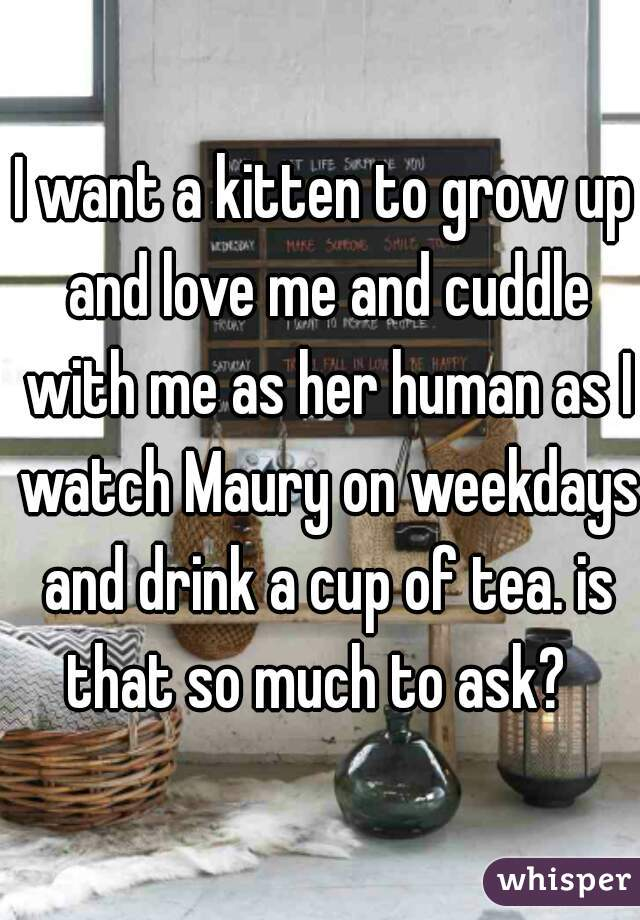 I want a kitten to grow up and love me and cuddle with me as her human as I watch Maury on weekdays and drink a cup of tea. is that so much to ask?