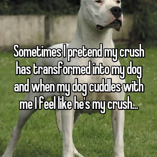 Sometimes I pretend my crush has transformed into my dog and when my dog cuddles with me I feel like he's my crush...