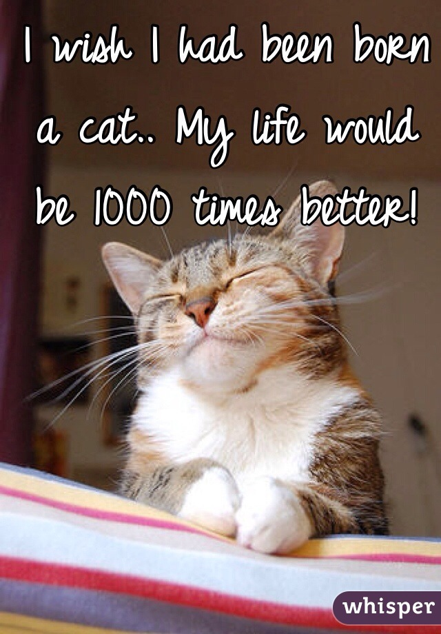 I wish I had been born a cat.. My life would be 1000 times better!