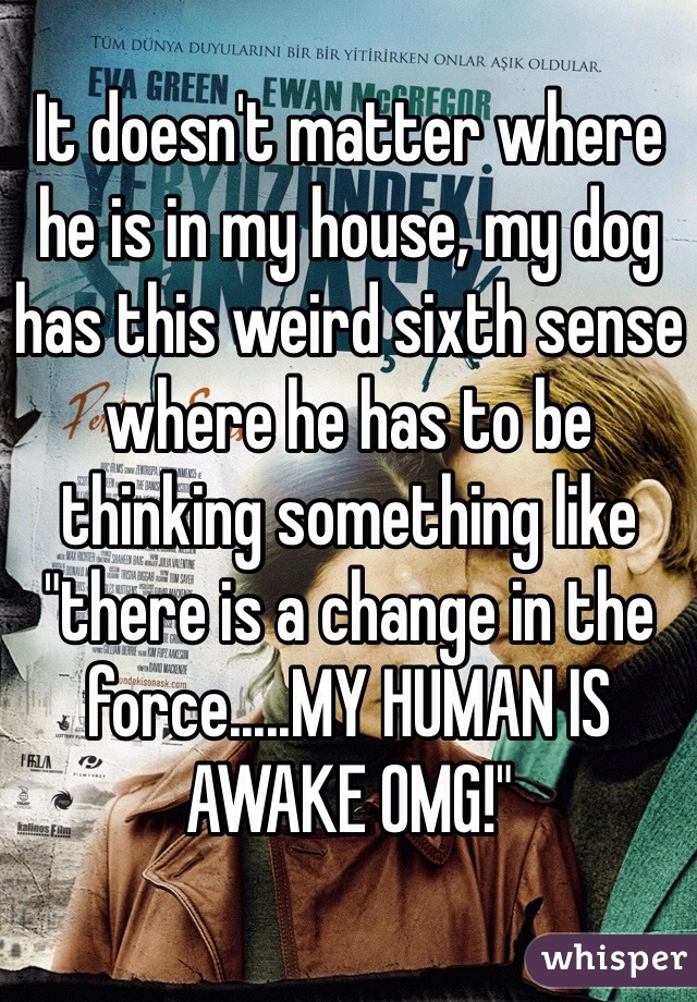 """It doesn't matter where he is in my house, my dog has this weird sixth sense where he has to be thinking something like """"there is a change in the force.....MY HUMAN IS AWAKE OMG!"""""""