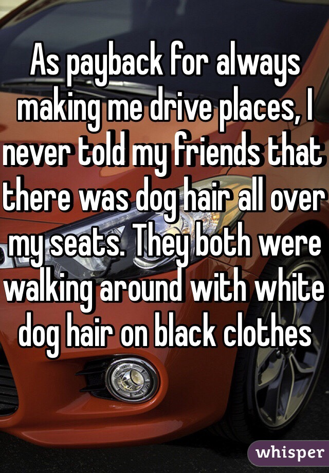 As payback for always making me drive places, I never told my friends that there was dog hair all over my seats. They both were walking around with white dog hair on black clothes