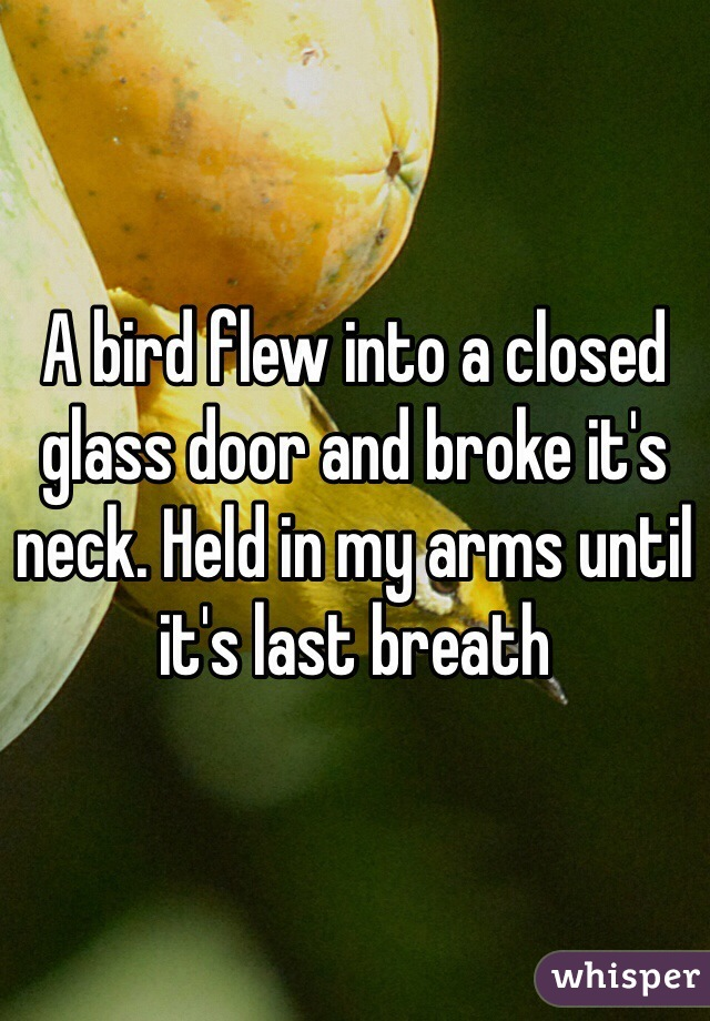 A bird flew into a closed glass door and broke it's neck. Held in my arms until it's last breath