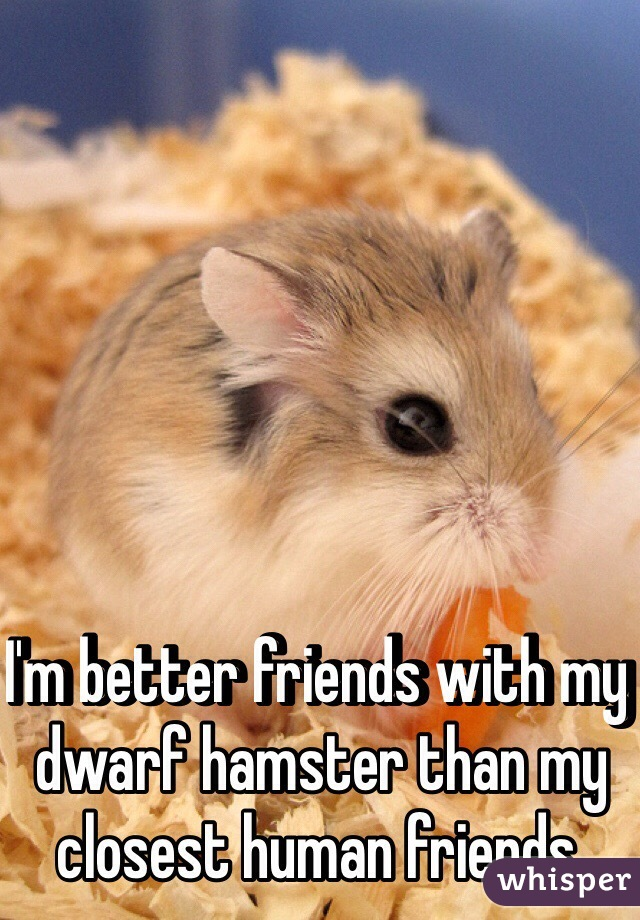 I'm better friends with my dwarf hamster than my closest human friends.