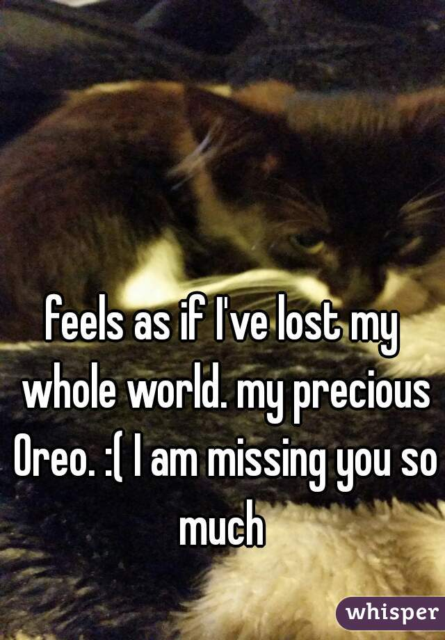feels as if I've lost my whole world. my precious Oreo. :( I am missing you so much