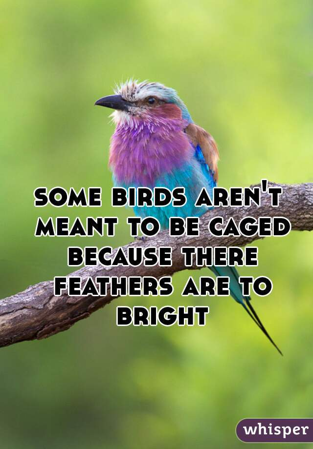 some birds aren't meant to be caged because there feathers are to bright