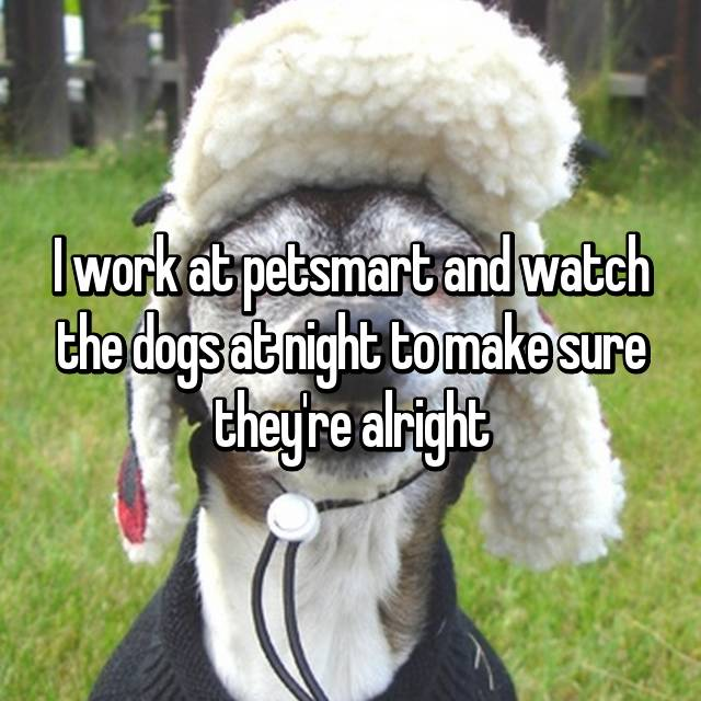 I work at petsmart and watch the dogs at night to make sure they're alright
