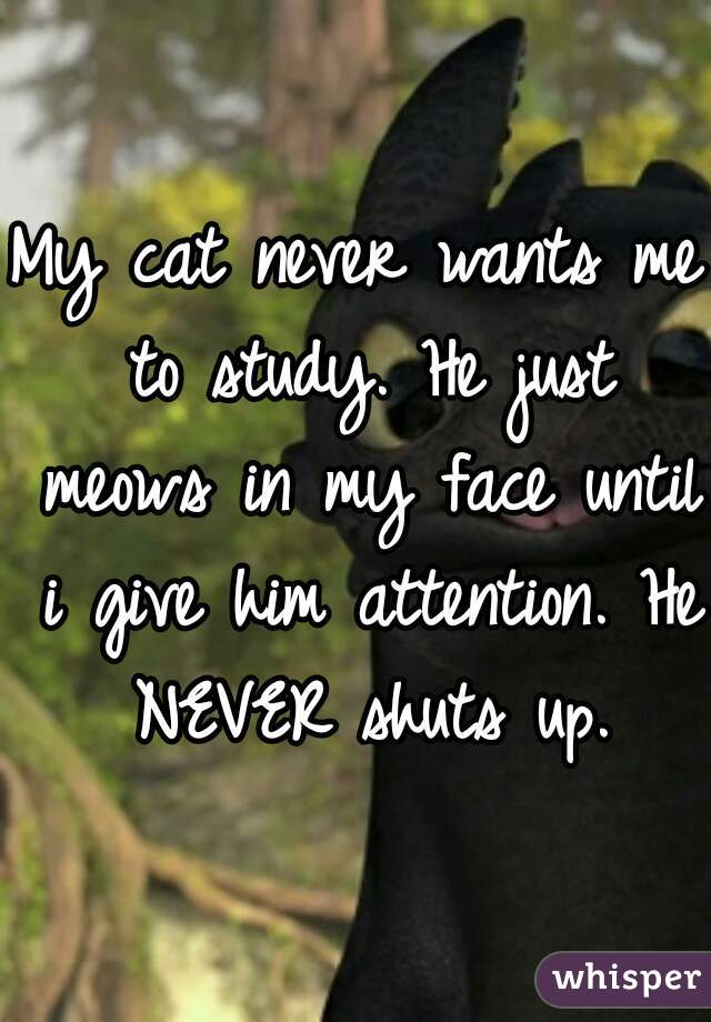 My cat never wants me to study. He just meows in my face until i give him attention. He NEVER shuts up.