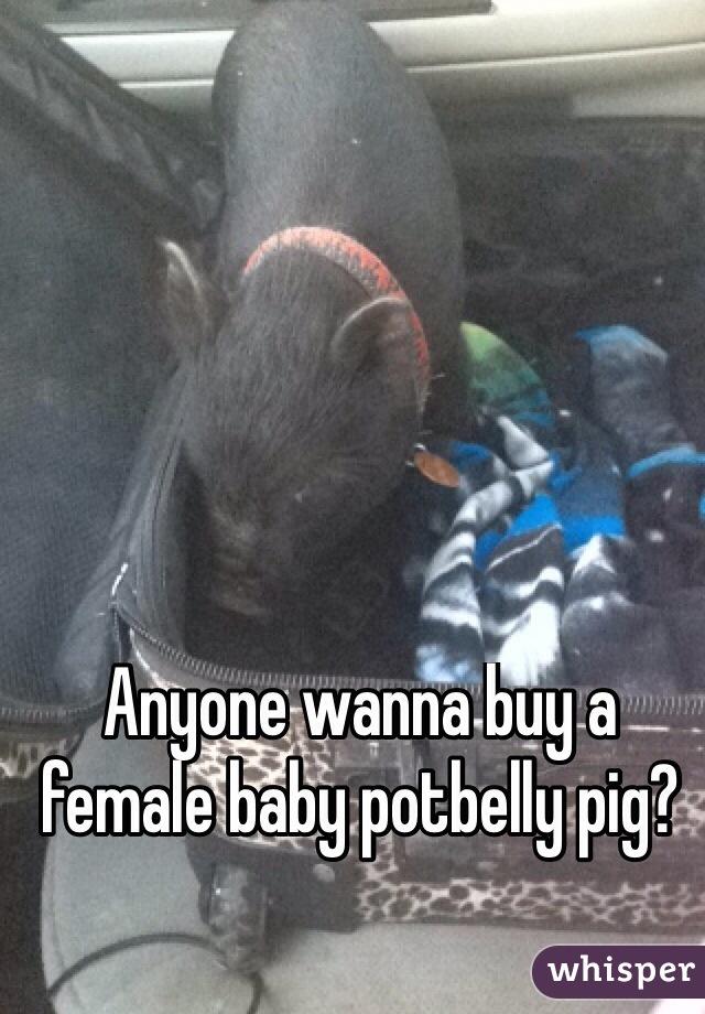 Anyone wanna buy a female baby potbelly pig?