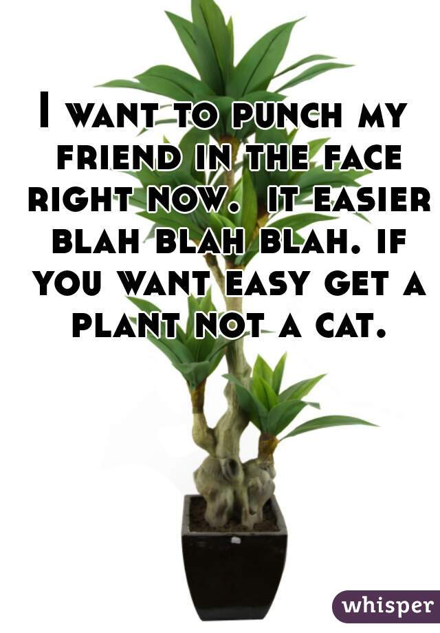 I want to punch my friend in the face right now.  it easier blah blah blah. if you want easy get a plant not a cat.