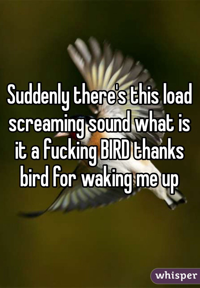 Suddenly there's this load screaming sound what is it a fucking BIRD thanks bird for waking me up