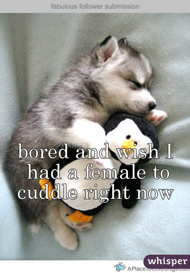 bored and wish I had a female to cuddle right now